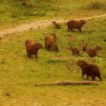 Ales Ondrovcik - Pantanal - _DSC0266