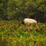 Ales Ondrovcik - Pantanal - _DSC0555