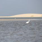 Bohdana Rambouskova - Ditwah white heron