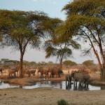 Vita Krsul - Namibia_Chobe
