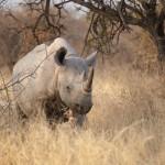Vita Krsul - Namibia_Etosha