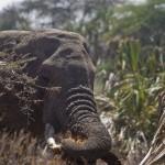 Zuzana Samkova - sloni v divocine Samburu