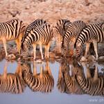 VACLAV SILHA - namibie (3)