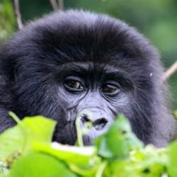 David Svejnoha - uganda