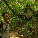Jirka Hruška - male sundy - Thomas monkey v NP Gunung Leuser