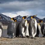 Vaclav Silha - antarktida (2)