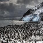 Vaclav Silha - antarktida (3)
