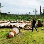 Filipiny - po tajfunu (7)