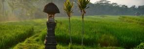 MAREK TURYNA - ROK NA CESTACH - sunrise rice paddies Bali