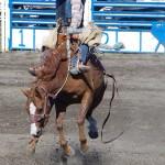 VLADIMIR PRACHAR - kanada - Canada_rodeo