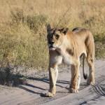 Marek Kovar - 3403 Národní park Chobe