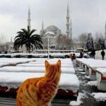 ST - Blue Mosque winter