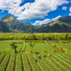 rice-field-landscape-hills-farmers-village-villagers-nature-scenic-field-grassland-highland-vegetation-agriculture-sky-mount-scenery-mountain-paddy-field-grass-hill-stati