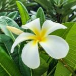 Jiri Soural - havaj (4)