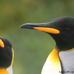 Antarktida - IMG_2096