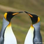 Antarktida - IMG_2631