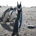 Ruda Svaricek - antarktida (1)