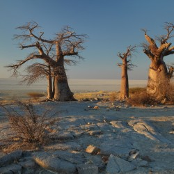 Vita Krsul - Namibia_Makgadikgadi