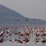 Zuzana Samkova - u jezera Nakuru