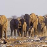VACLAV SILHA - namibie (5)