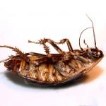 Milan Vaclavik - hmyzi kuchyne - 15 Hmyz