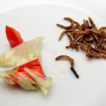 Milan Vaclavik - hmyzi kuchyne - 6 Hmyz