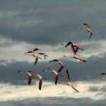 Martin Sil - Namibie - sil-namibie-plamenaci na bourkovem nebi