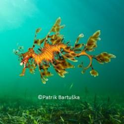 Patrik Bartuska - LSD 1147
