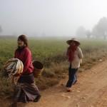 Tomas Stingl - Barma (5)