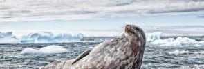 Vaclav Silha - antarktida (1)