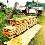 Filipiny - po tajfunu (6)