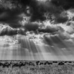 Vaclav Silha - Kena a Tanzanie (1)