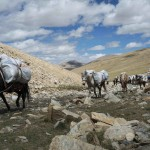 SVETLANA NALEPKOVA - maly tibet (1)