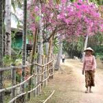 Zdena Strykova - Laos - Venkovska_idyla