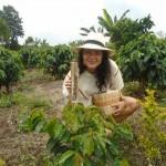 Milada Konecna - COLOMBIA coffee tree