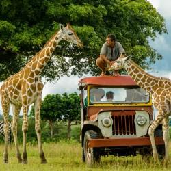 Marek Balicki - fil safari marek cupim (1 z 1)
