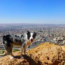 Slavek Kral - Iran, Tabriz(1)