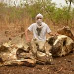 ARTHUR F. SNIEGON - Poaching, Big Elephant bones and Arthur,Chad,2017