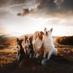 Kristyna Kvapilova - banda psů (2)